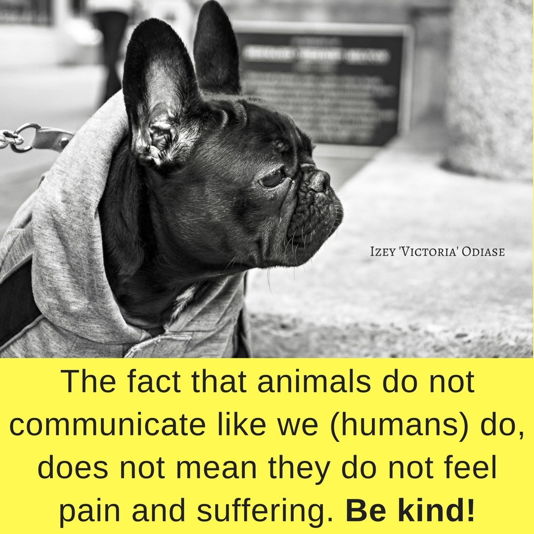 Be kind to animals. Izey Victoria Odiase