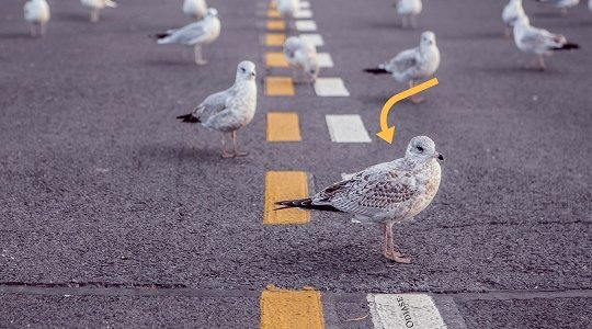 Stop Killing Birds. Save the Birds